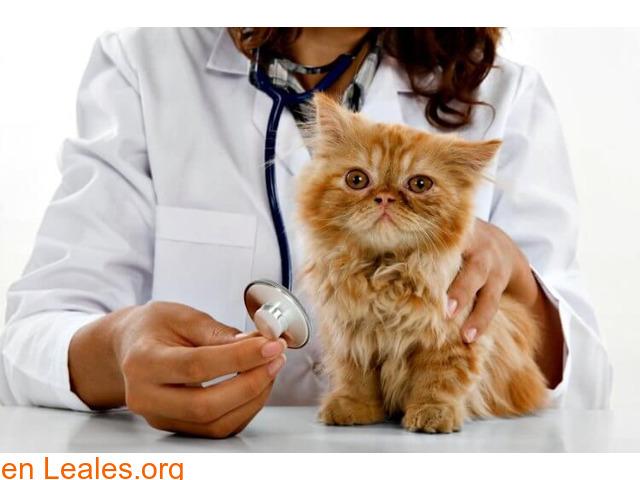 Guía de cuidados del gatito