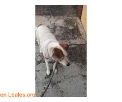 Encontrado en San Lorenzo - GC