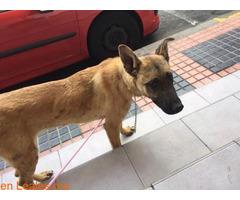Gran Canaria - Maspalomas Animal Rescue