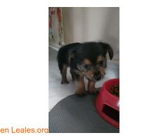 ADOPTADA! Cachorrita de 2 meses