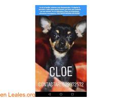 EN CASA - Cloe