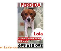 YA EN CASA - Lola
