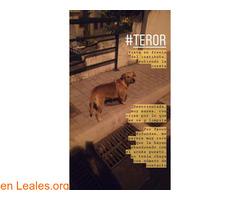 Vista en Teror