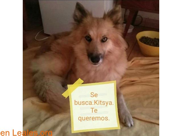 PERDIDA-SAN MATEO- SE LLAMA KITSYA