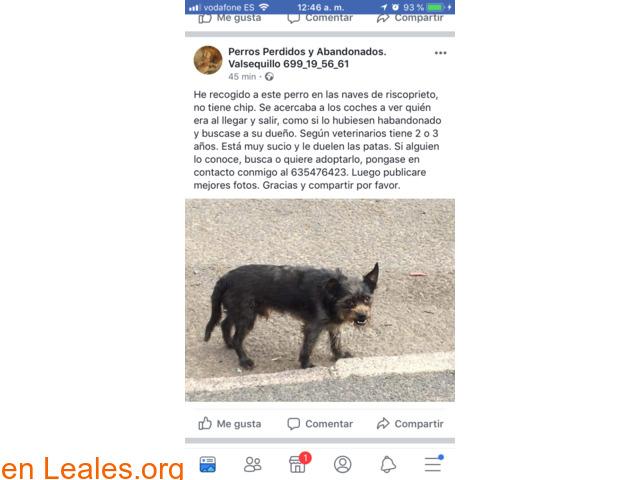 ENCONTRADO- PUERTO DEL ROSARIO FUERTEVEN