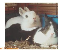 Kai y Kiara en adopción