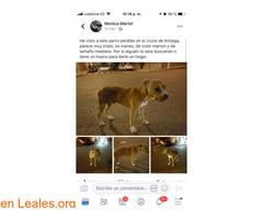 ¡¡ENCONTRADO EN CRUCE DE ARINAGA!! - Imagen 4/4