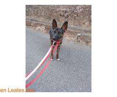 2 perros perdidos en Santa Cristina-Moya