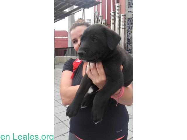 Adoptado! Cachorro Perdido - 2