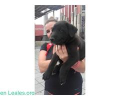 Cachorro Perdido, para Acogida/Adopción