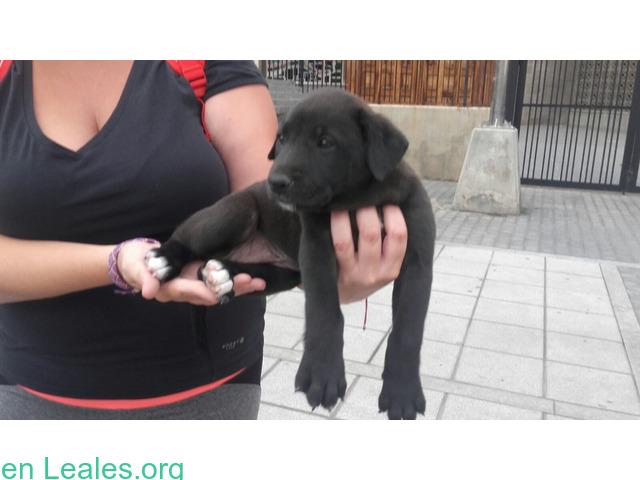 Adoptado! Cachorro Perdido - 3