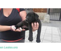 Adoptado! Cachorro Perdido - Imagen 3