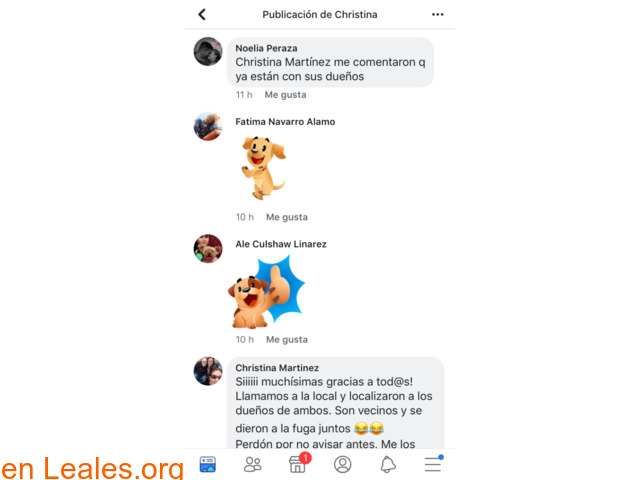 ENCONTRADOS DOS PERRITOS. FUERTEVENTURA.