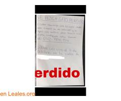 GATITO PERDIDO EN LAS PALMAS GC.