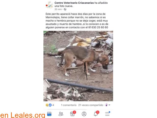 EN CASA!!!      GALDAR  MARMOLEJOS