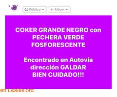 ENCONTRADO COKER GRANDE NEGRO-  GALDAR