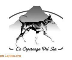 LA ESPERANZA DEL SUR  Refugio Animales