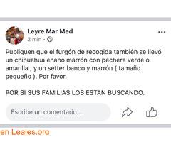 RECOGIDA DE ANIMALES SE LOS LLEVÓ..