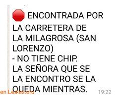 EN CASA!!!!               SAN LORENZO.
