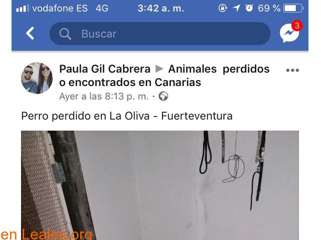 PERDIDO EN LA OLIVA.    FUERTEVENTURA. - 2