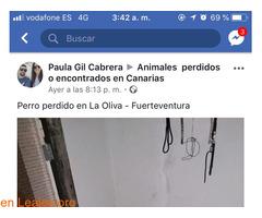 PERDIDO EN LA OLIVA.    FUERTEVENTURA. - Imagen 2
