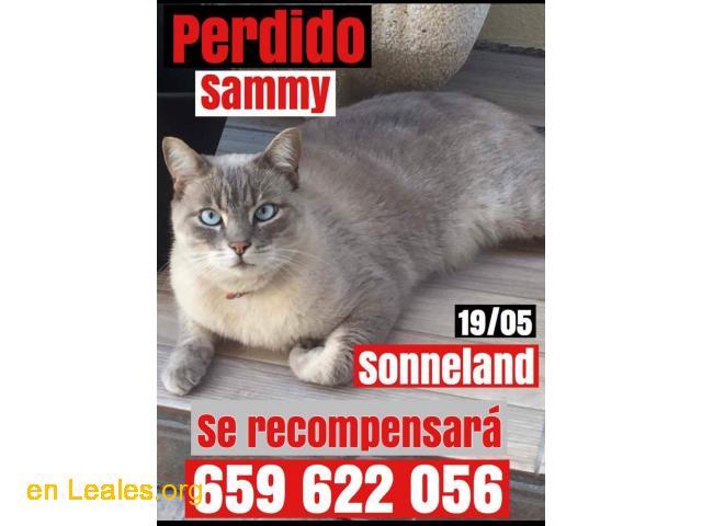 Se busca SAMMY - 1/1