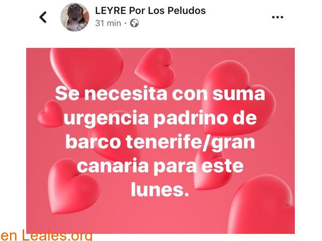 PADRINO DE BARCO-TENERIFE / GRAN CANARIA