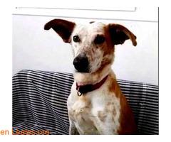 ELY,  Adopción Urgente Tenerife