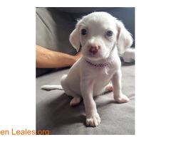 Lila, un amorcito chiquitito