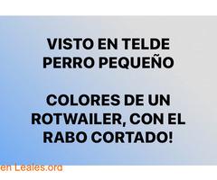 VISTO TELDE PERRO PEQUEÑO COLOR ROTWAILE