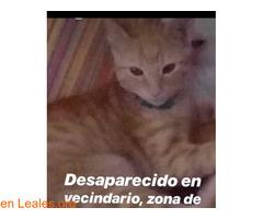 EN CASA!!         VECINDARIO - DOCTORAL.
