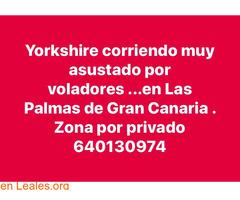 EN CASA!!!      YORKSHISE CORRIENDO LPGC