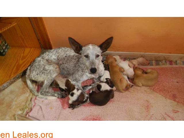 Manchi y sus bebés