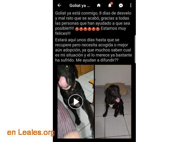 YA EN CASA - GOLIAT