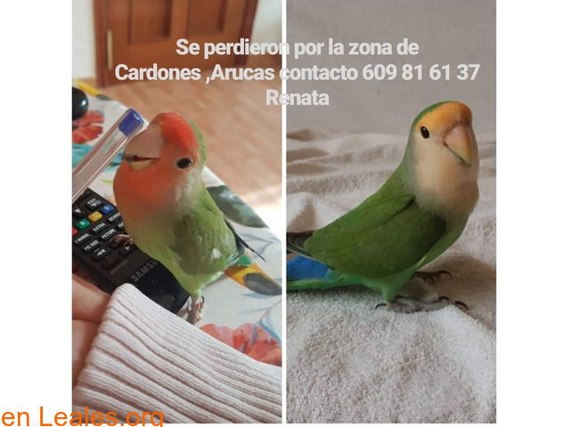 PERDIDOS EN CARDONES - ARUCAS.  GRACIAS