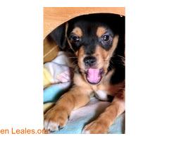 Stay, un cachorrito que espera un hogar