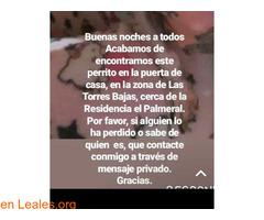 ENCONTRADO EN LAS TORRES BAJAS LPGC