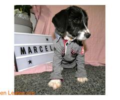 Marcel os espera