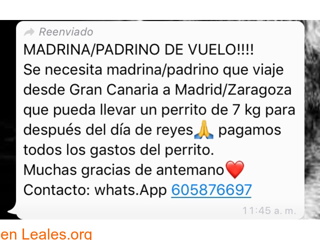NECESITA PADRINO VUELO:GC-MADRID/ZARAGOZ