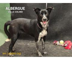 AMELIA ADOPTADA ALBERGUE VALLE COLINO - Imagen 3/3