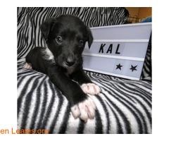 Kal, un alma en la perrera