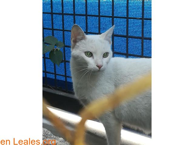 Ayuda para capturar 2 gatos en Telde