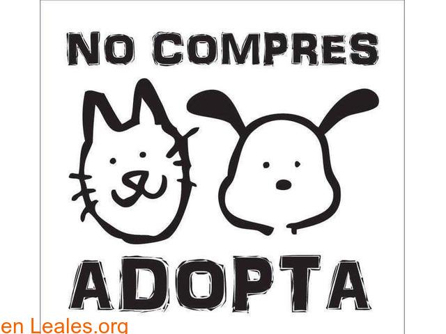 Adopción de gatos presencial en perrera