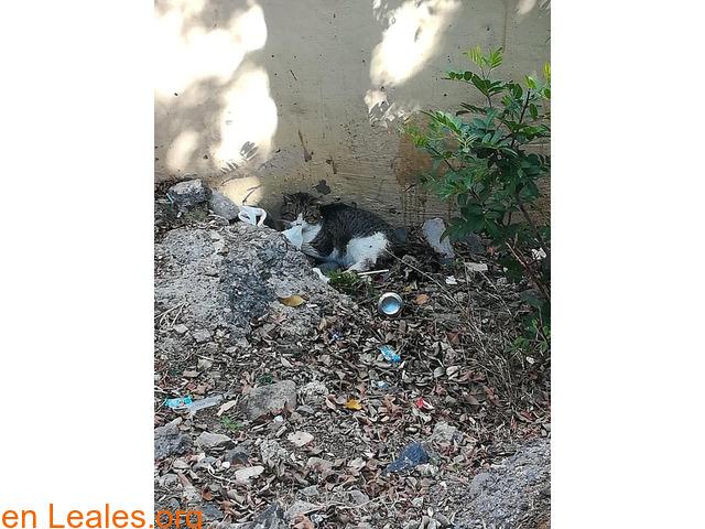Gato malherido en Las Palmas de GC
