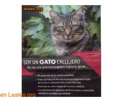 Soy un gato callejero y te ayudo
