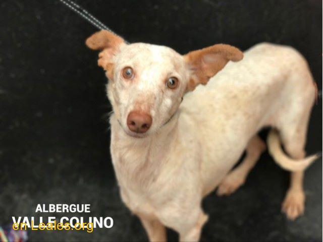 MARIONA ADOPTADA ALBERGUE VALLE COLINO - 1/2