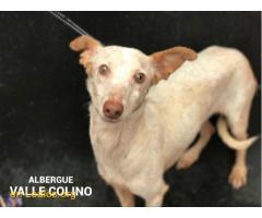 MARIONA ADOPTADA ALBERGUE VALLE COLINO - Imagen 1/2