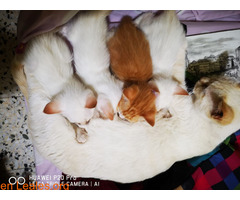 1 hembra, 3 machos, adopción con amor