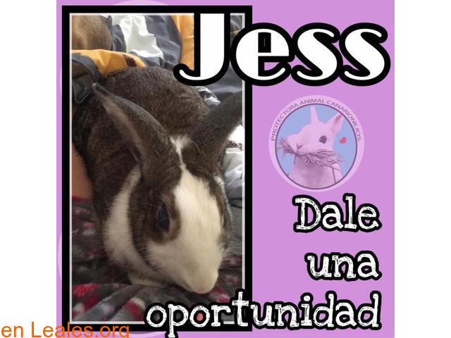 Jess en adopción