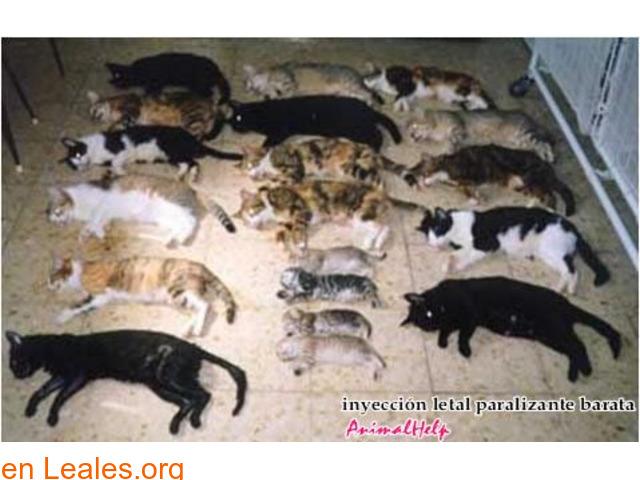 Sacrificios de animales sanos en GC